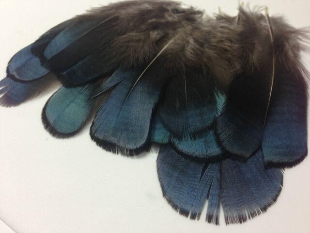 BULK 50 x 4-5cm RARE BLUE Lady Amherst Natural Pheasant Feathers DIY Art Craft