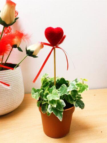 ENGLISH EDERA SEMPREVERDE GIARDINO PIANTA RAMPICANTE /& cuore rosso regalo per San Valentino