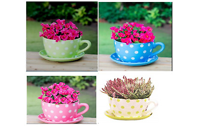 New Gaint Tea Cup & Saucer Planter in Polka Dot, Daisy and Rose | eBay