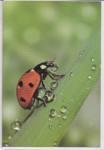 lady bird ein Marienkäfer auf einem Blatt und viele Wassertropfen Klappkarte