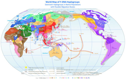 World Map Picture A3 Poster Human Migration Routes of Y-DNA Haplogroups