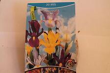 20 Blumenzwiebeln,Iris, Hollandica,Mischung#BZ12
