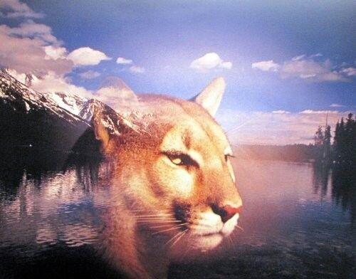 Grand Teton Mountain Spirit Of Lion Animal Wall Decor Art Print Poster 16x20