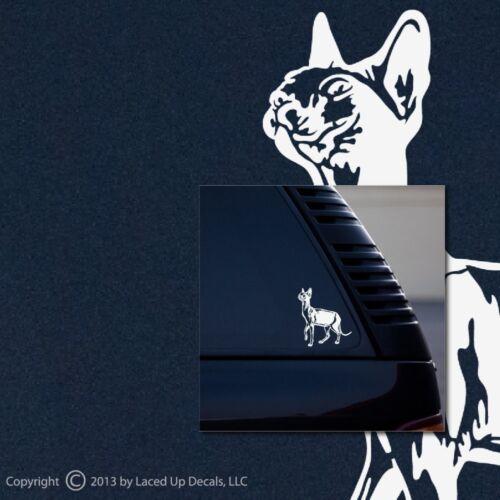 Sphynx Pelo Gato Calva Gato Ventana Vinilo calcomanía # 2