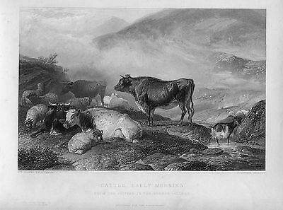 S «cattle Early Morning» Engraved By John Cousern On Work Of T Cooper