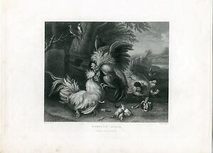 Domestic-Birds-Engraving-By-W-Chevalier-1833