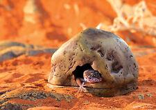 Exo Terra Gecko Cave (Small)