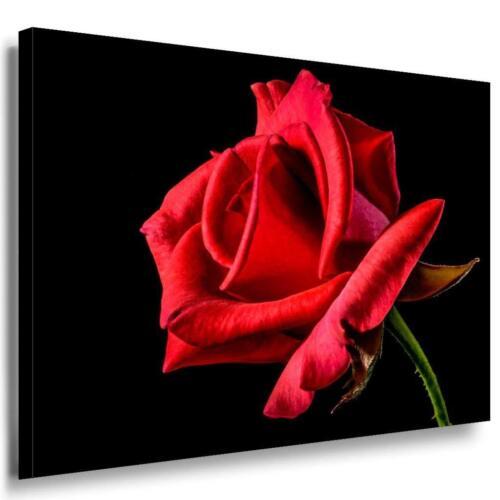 Kunstdruck XXL Wandbild Mehrfarbig Rote Rose Leinwandbild AK Art Bilder
