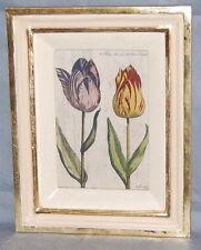 Antique Dutch De Passe Hand Colored Tulip Botanical Print Tulipa Alba Cum Rubr