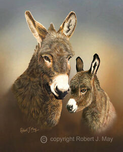 Limited-Edition-of-50-Donkey-amp-Foal-Head-Study-Prints-by-Robert-J-May