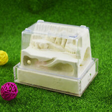 Ant farm . New educational formicarium - ant nest for LIVE ants