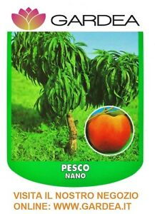 Pesco nano piante da frutto nane ebay for Piante da frutto nane