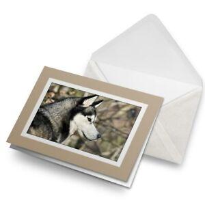 Greetings-Card-Biege-Siberian-Husky-Dog-Alaskan-Malamute-24187