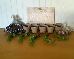 Gardening-for-Kids-Complete-Kid-039-s-Succulent-Garden-Kit-5-plants-for-kids
