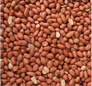 25KG  PEANUTS - HIGH QUALITY PROTEIN WILD BIRD FOOD