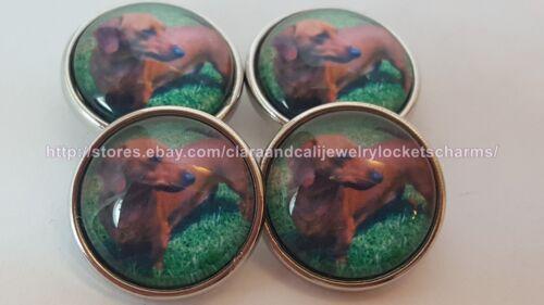 1 Dachshund Wiener Dog Chunk Button Charm f//Ginger Snap Noosa US Seller sc214