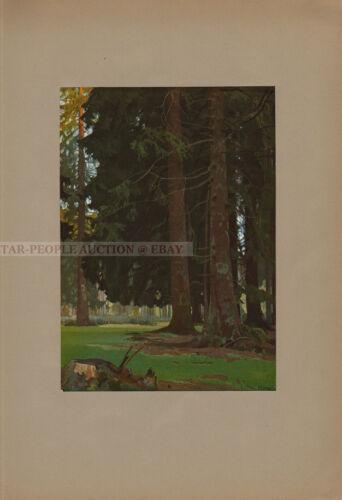 HEINRICH KLEY - SCHWARZWALDTANNEN * rare art PRINT from 1910