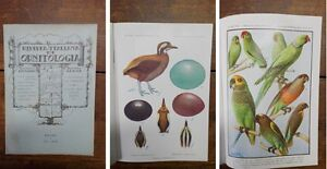 RIO-Rivista-Italiana-Di-Ornitologia-1939-1
