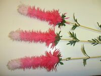 Vintage Plastic Pink Peruvian Stems Set Of 3