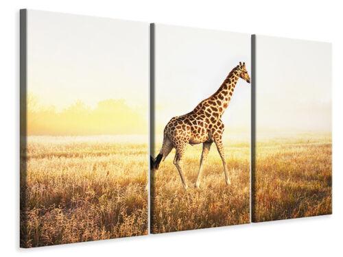 Leinwandbild Die Giraffe