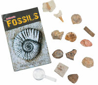 Authentic Fossils Science Kit - Dig 12 Geniune Specimens - Ages 8+ - Brand