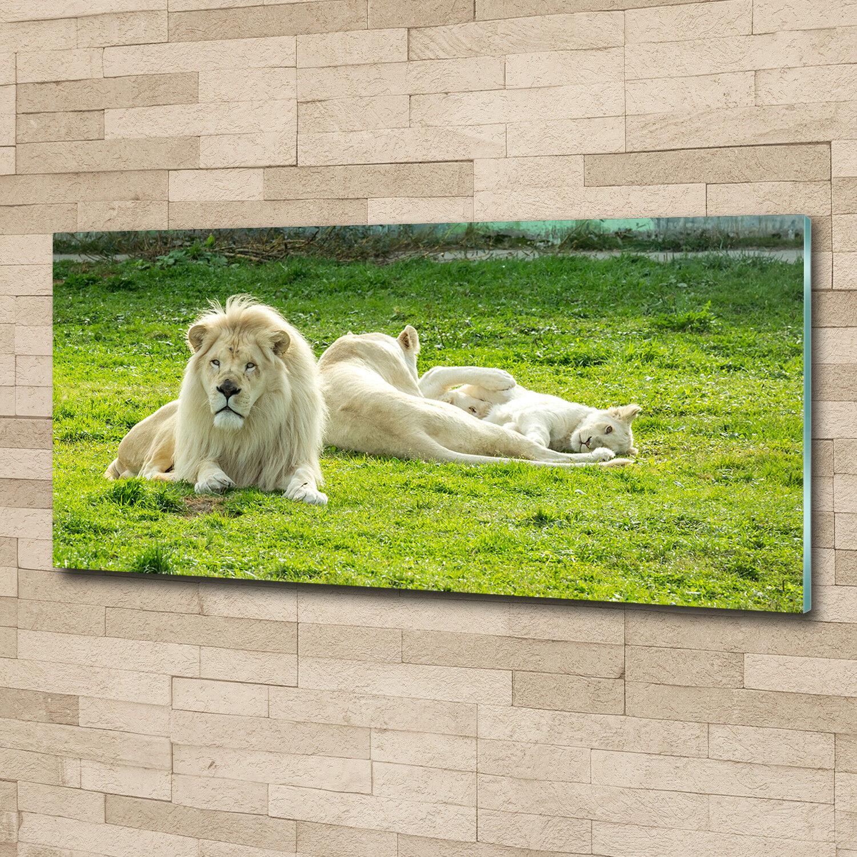Glas-Bild Wandbilder Druck auf Glas 125x50 Deko Tiere Beige Löwen