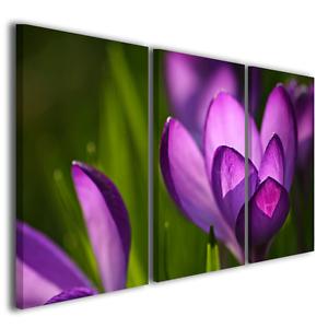 Quadri moderni Crocus Spring stampe su tela moderne con fiori quadro ...