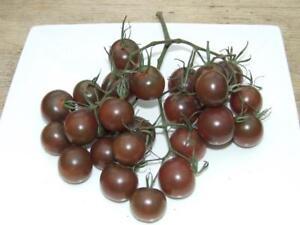 Famous-Hungarian-purple-Tomato-034-Black-Cherry-034-Heirloom-NON-GMO-semi