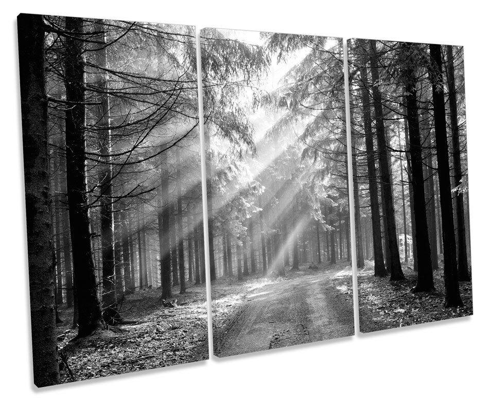 FORESTA PAESAGGIO BIANCO E NERO NERO NERO foto TREBLE TELA Wall Art Print 581099