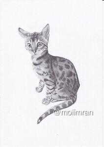 Dessin-au-crayon-du-Bengale-Chat-Croquis-Sketch-of-Animal-Pet-Chaton-Animal