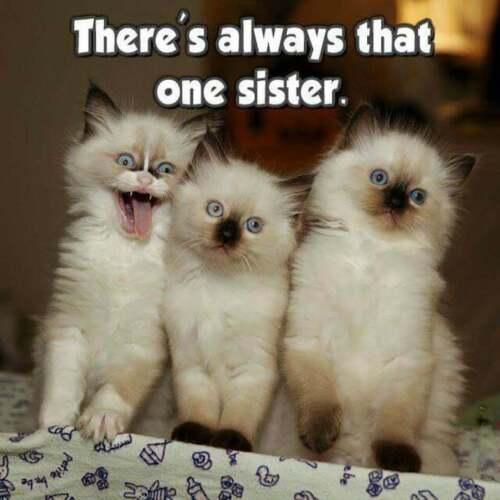 Funny Sister  Cat Time  Refrigerator Locker  Magnet