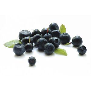Pure acai berry diet pills