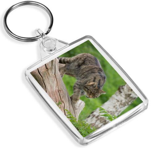 Scottish Wildcat Keyring Great Britain Nature Wildlife Fun Gift #16321 IP02
