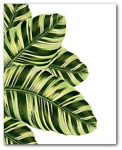 tropical leaves print botanical musa vittata leaf art 8 x 10