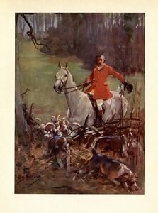 HUNTING FOX WITH HOUNDS, FOXHOUNDS JUMPING THE FENCE, HUNTER ON HORSEBACK, DOG