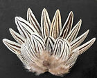 20 Mix Stripe White & Black Silver Pheasant Craft/Art/Hair/Jewellery Feathers