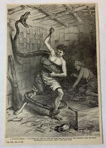 1885-Revista-Grabado-un-Terrible-Combate-Hombre-Pelea-Gigante-Serpiente