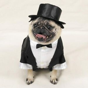 Image result for dog wearing tuxedo