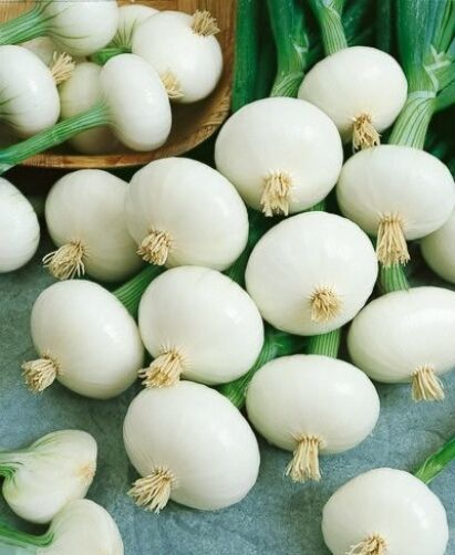 VEGETABLE  ONION PICKLING CRYSTAL WHITE WAX   2.5GM ~ 700 SEEDS