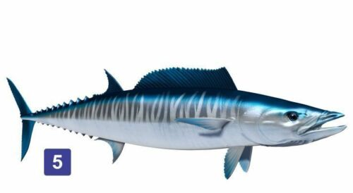 Many Sizes and Styles Etc Vehicle Wahoo Fish Beautiful Decal for Your Boat