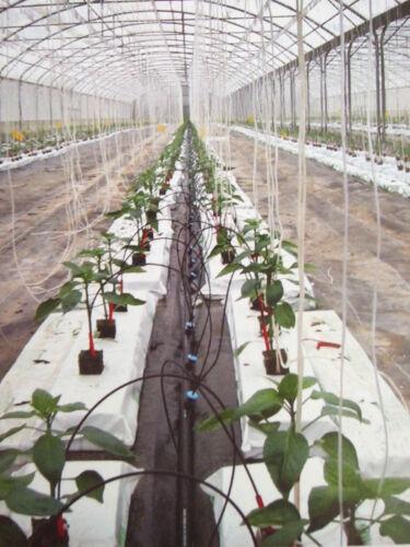 gruppe mit astina vormontiert 4 uscite mit kapillarrohr 60cm vasen bewässerung