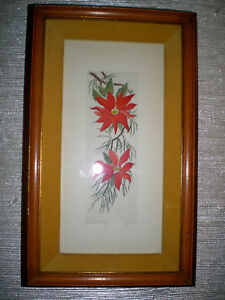 Details About Gross Botanical Engraving Of Poinsettias Framed Signed Hand Colored