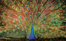 Jigsaw puzzle Animal Bird Indian Peacock The Big Boy 1000 piece NEW Made in USA