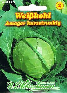 100 Samen Amager Weißkohl