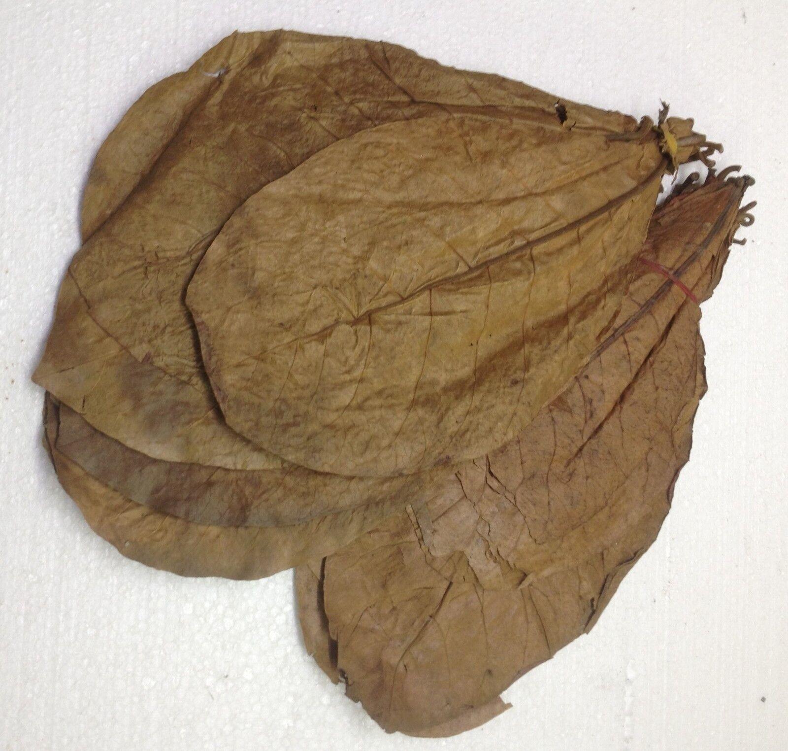500 Gramm grande foglie Mandorlo Indiano 100% wirkstoffe GRAZIE A DELICATO