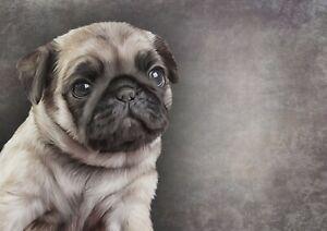 A1-Pug-Puppy-Drawing-Poster-Art-Print-60-x-90cm-180gsm-Pencil-Art-Gift-15650