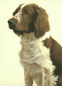 Nigel-Hemming-JUST-DOGS-WELSH-SPRINGER-SPANIEL-Brown-amp-White-Gun-Dogs-Art