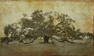 Louisiana by William Guion 34x56 Tree Poster LANDSCAPE ART PRINT Sugarmill Oak