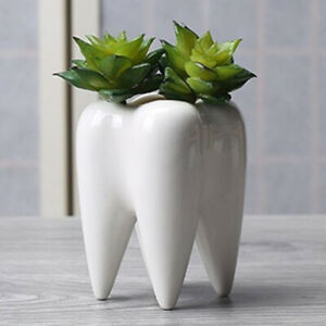 Tooth-Shape-Flower-Pot-DIY-Gardening-Ceramic-Succulent-Plant-Holder-Decor-Novel
