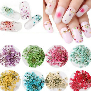 Real Nail Dried Flowers Nail Art Decor Diy Tips Manicure Stickers